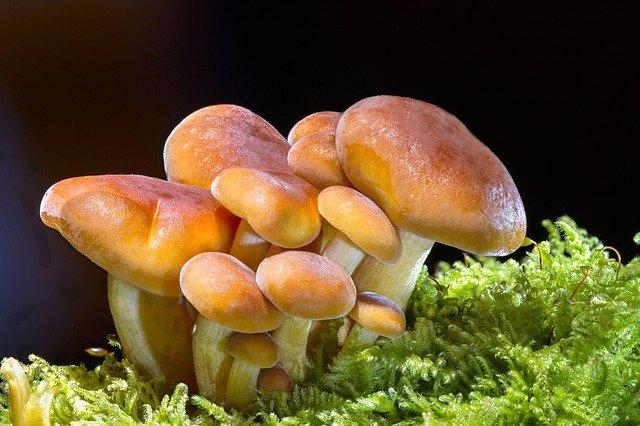 jak szybko rosną grzyby